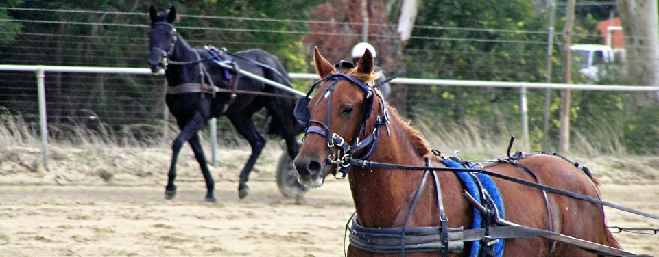 Standardbred Breeders Association